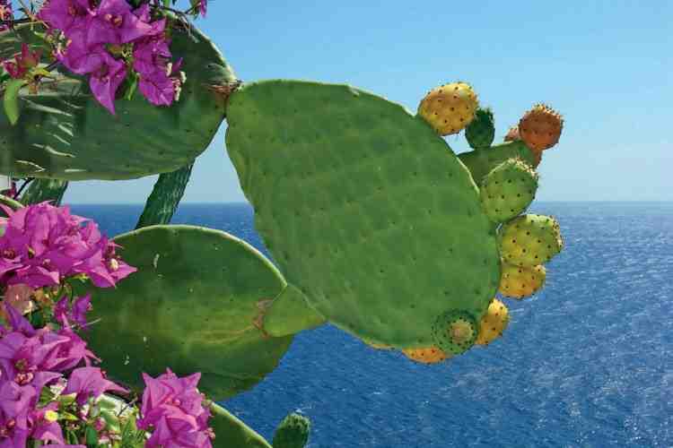 mare-costa-smeralda4